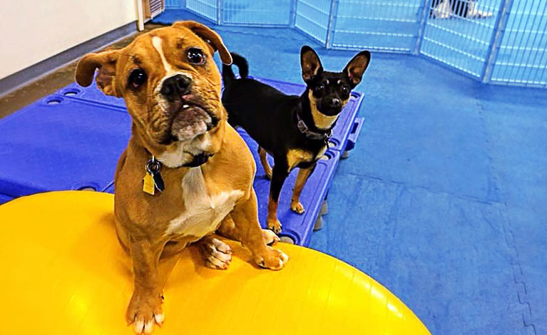 Dogtown day care and dog grooming with self wash baths and dog dog daycare solutioingenieria Choice Image