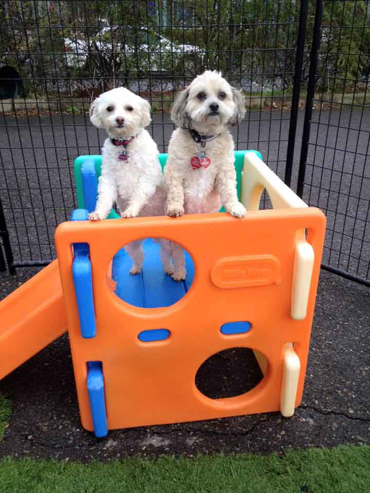 Dogtown provides safe dog day care for your dog thumbnail image 1 solutioingenieria Choice Image